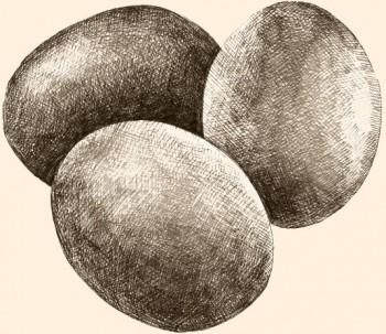 Una fuente importante de proteínas, aminoácidos esenciales y los nutrientes luteína y colina (vitamina B).
