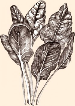 Rico en folato, hierro, carotenoide y luteína. Lo hemos agregado por su gran versatilidad.
