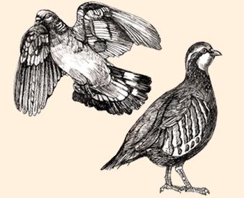 Perdiz y paloma silvestres de las Tierras Altas de Escocia.