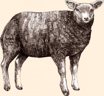 cordero británico criado en libertad. Es el principal ingrediente de la comida ESTATE LIVING